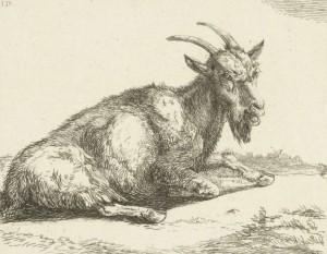 Geit, Jan Dasveld Rijksmuseum