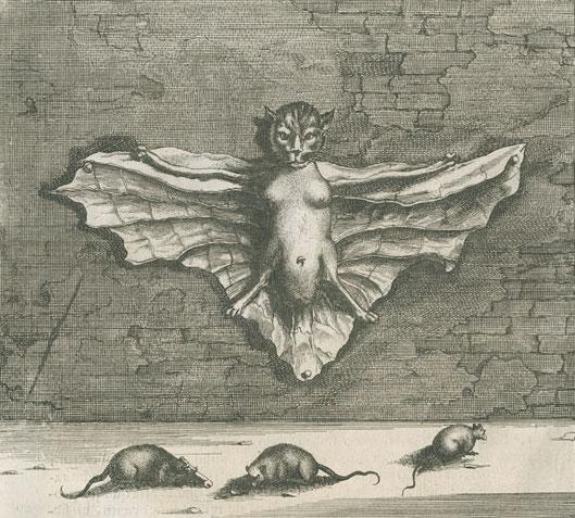 Vleermuiskat